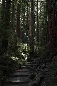 2017-07-14_6328_Olympic National Park