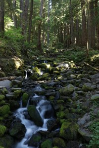 2017-07-14_6366_Olympic National Park
